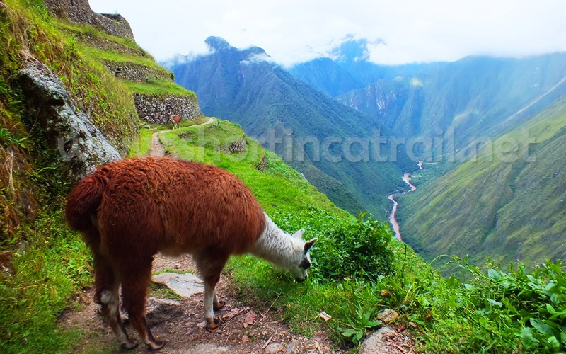 Machu picchu Travel informations